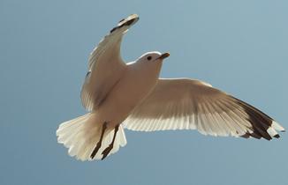 img1-seagull